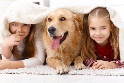 Pets: Why Are Children so Attracted to Animals?