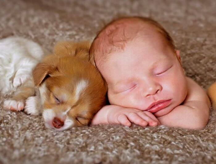 Is It Okay for Newborns to Live With Pets?