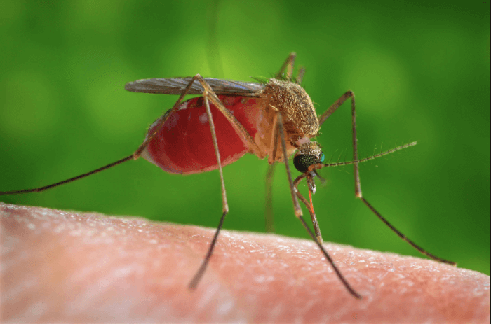 How Does The West Nile Virus Affect Pregnancy?