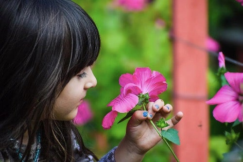 Botany Classes for Kids: Useful Tips
