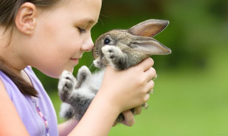 5 Pets for Children who Live in the Country