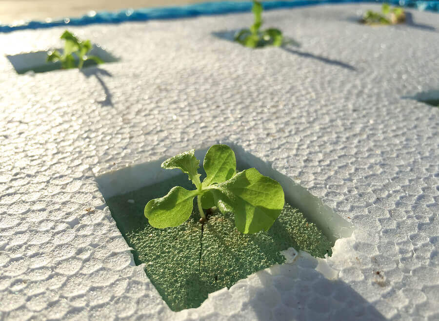 How to Create a Homemade Hydroponics System