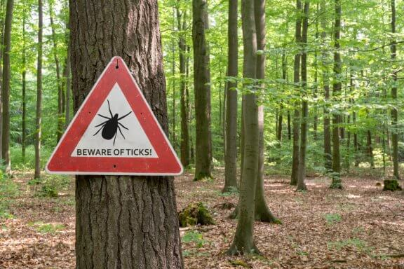 What to Do in the Case of Tick Bites