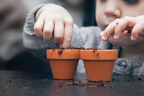 Growing a Fruit Tree from Seed with Your Kids