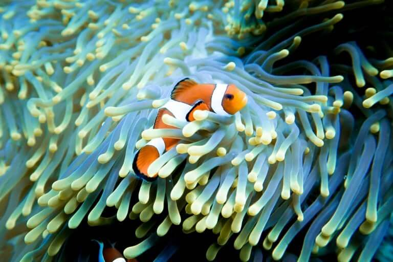 A clown fish like the one in Finding Nemo.