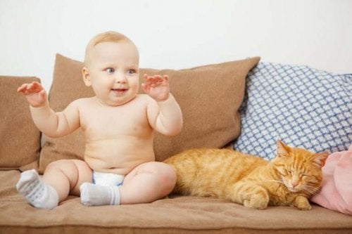 What to Do with a Pet when a Baby Arrives?