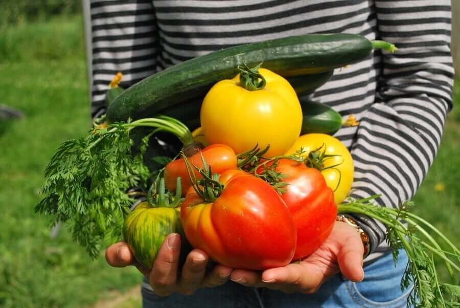 Is It Safe for Children to Follow a Vegetarian Diet?