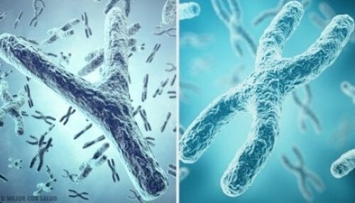 Genetics for Children: What Are Genes and Chromosomes?