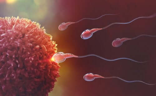 How Fertilization Occurs: The Miracle of Life, Step by Step