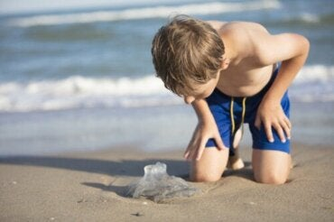 Jellyfish Stings in Children: What You Need to Know