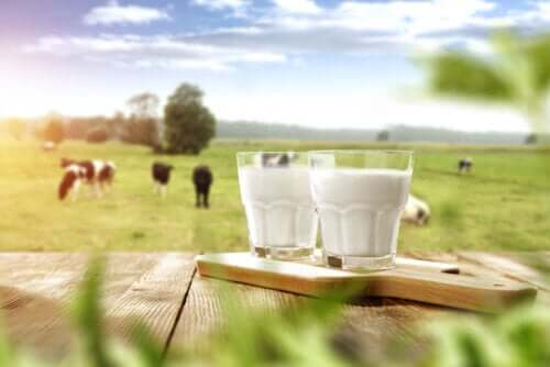 Is It Unnatural to Drink Milk from Other Animals?
