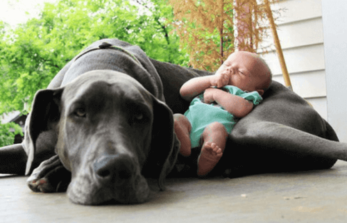 A newborn baby sleeping with a large dog.