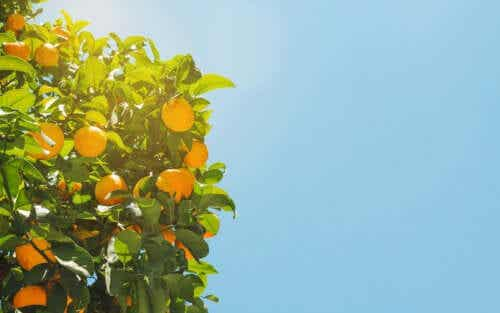 How to Explain Attachment Theory with Oranges