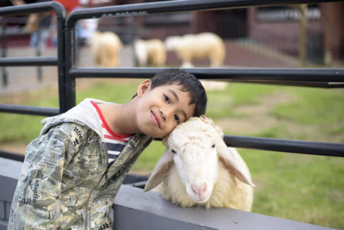 A child snuggling a sheep.