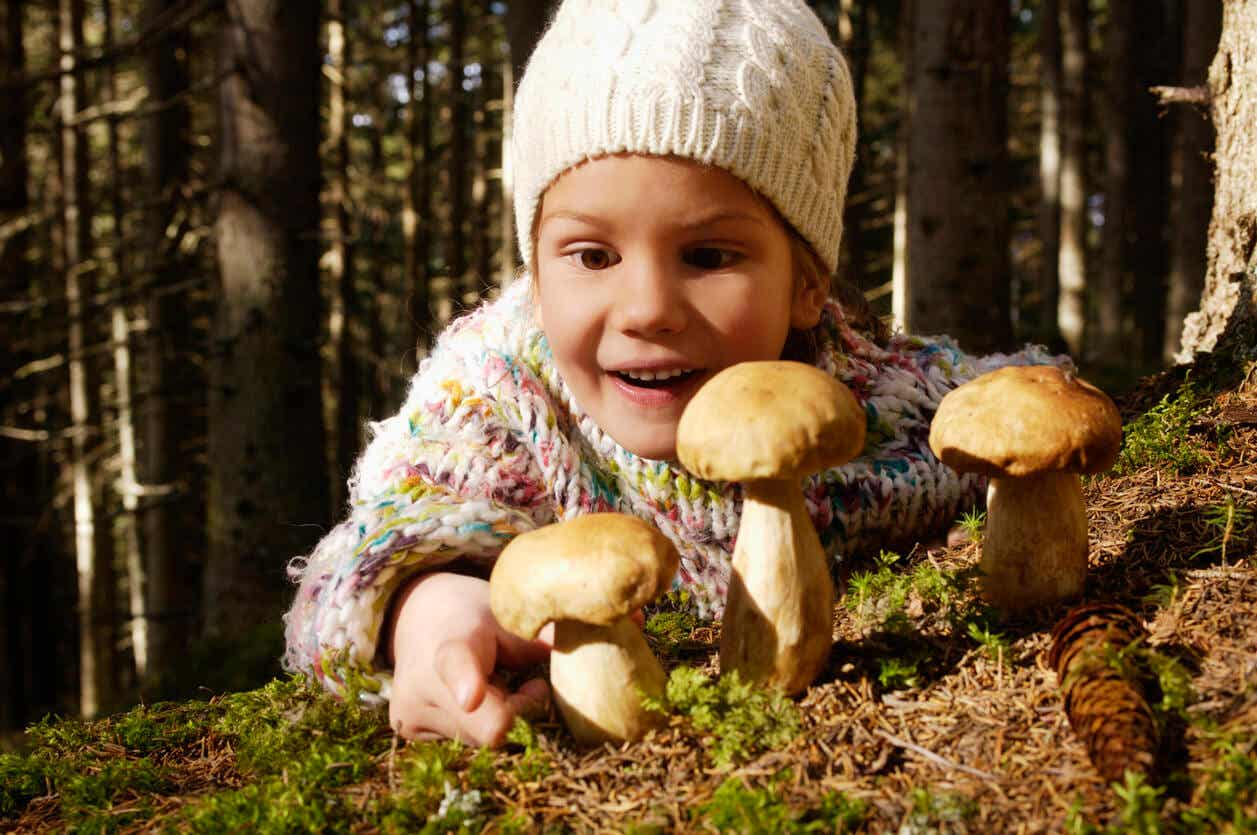 A child in the woods looking at poisonous mushrooms.